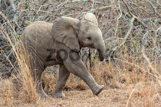 very cute elephant cub