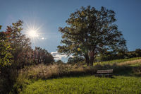 vineyard rechnitz / southern burgenland