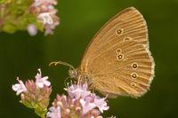 1 BA Schmetterling 1.jpg