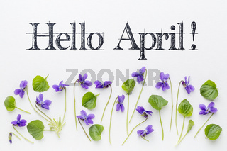 Hello April greetings with viola flowers