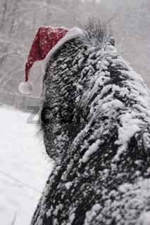 Pony im Schnee mit Weihnachtsmuetze