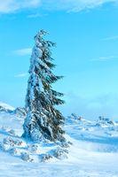 Icy snowy fir tree.