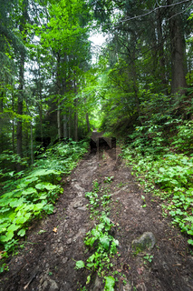 Trekking trail at deep mountains forest. Carpathian, Ukraine