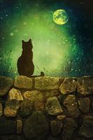 Black cat on old rock wall Halloween night