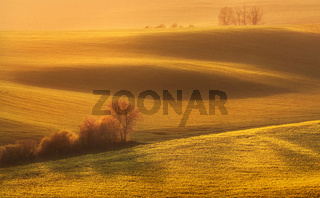 Landscape with green fields, trees, and flowers at colorful sunset
