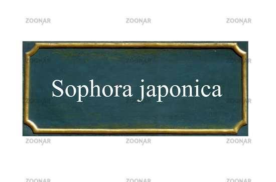 shield  Sophora japonica