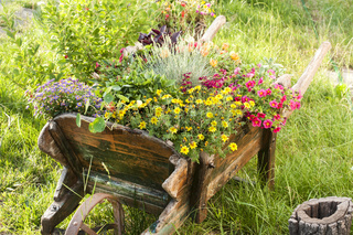 Wooden yard cart with flowers
