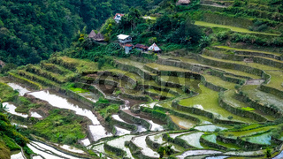 Village houses near rice terraces fields. Amazing abstract texture with sky colorful reflection in water. Ifugao province. Banaue, Philippines UNESCO heritage