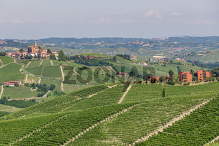 Green vineyards on the hills in Piedmont, Italy