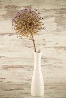 Allium in the Vase