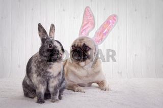 Mops und Kaninchen
