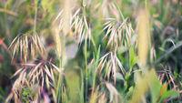 Feaser grass macro