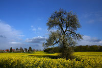 Spring in Bliesgau