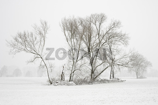 Feldgehölz im Winter... Meerbusch *Nordrhein-Westfalen*