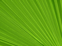 Tropical plant leaf closeup