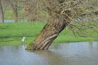 D--NRW--Hochwasser am Niederrhein.jpg