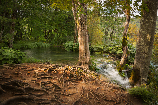 Forest in Plitvice Lakes National Park, Croatia