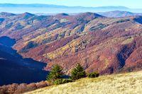Autumn colorful mountain slopes.