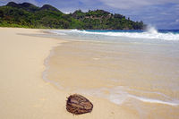 Kokosnuß am kilometer langen Traumstrand Anse Intendance, Insel