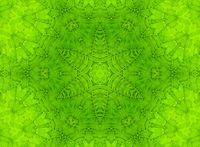 Green leaf abstract pattern