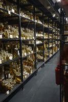 Vitrinen mit historischen Exponaten der sogenannten Naßsammlung, Naturkundemuseum , Museum für Naturkunde, Berlin, Deutschland, Europa