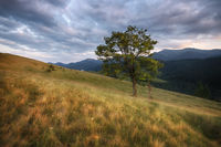 Carpathian mountains rural landscape