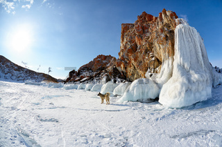 Rocks covered by ice on winter siberian Baikail lake