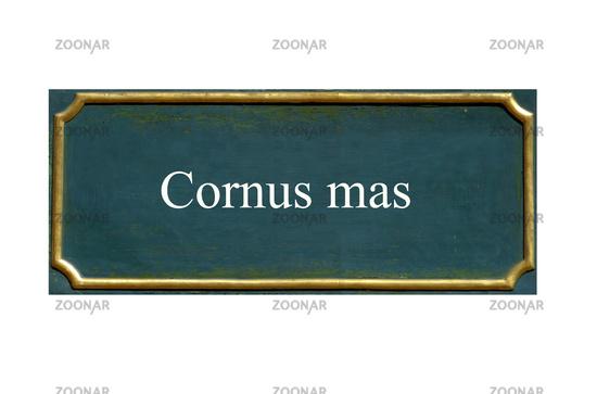 shield cornus mas,