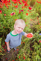 Cute boy in field with red poppies