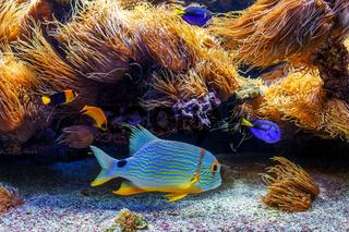 Colorful exotic fishes in aquarium.