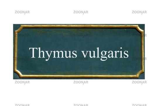 shield thymus vulgaris