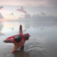 Starfish on summer beach