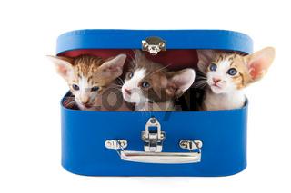 little cats in basket