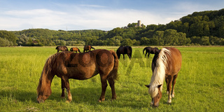 BO_Ruhrtal mit Pferden_02.tif