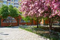 Blooming apple trees in the spring in the zoo park in Yekaterinburg.