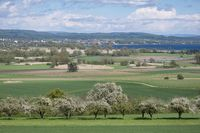 View over the orchards to the Radolfzeller Aach Ried with the lake constance