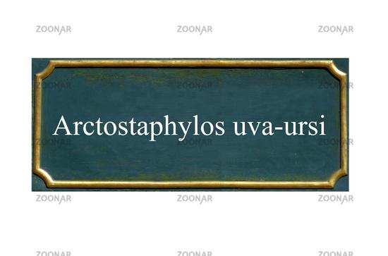 shield arctostaphylos uva-ursi