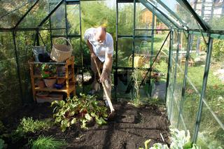 Bodenlockerung im Gewächshaus vor der Aussaat von Feldsalat