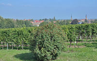 Wine Village of Edenkoben,Palatinate,Germany