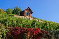 Saale Unstrut Weinberge - Saale Unstrut vineyards 01