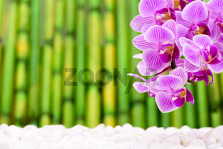 Orchidee im Detail