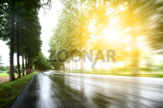 asphalt road with tree lawns under sunshine