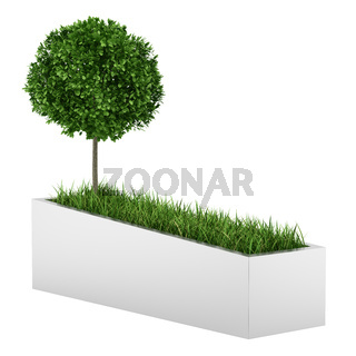 tree and grass in concrete planter isolated on white background