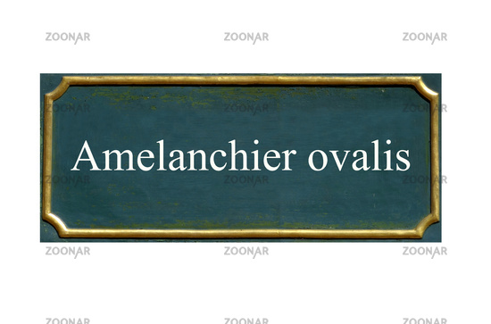 shield Amelanchier ovalis