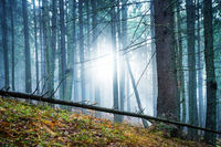 Mysterious fog in the forest