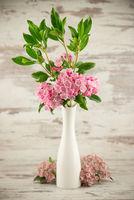 Rhododendron azalea in vase