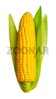 Corn ear isolated on white