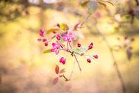 Ornamental - flowers