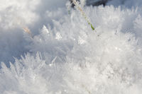 A blade of gras in ice needles