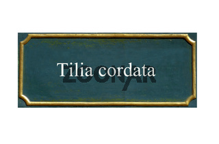 schild Tilia cordata, Winterlinde